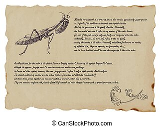 An hand drawn illustration - beetle, praying mantis