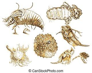 microorganisms - An hand drawn illustration - microorganisms...