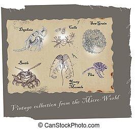 microorganisms - an hand drawn vector pack: microorganisms