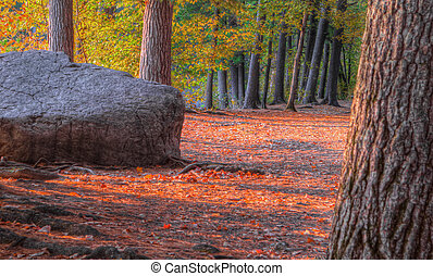 An HDR landscape of a forest and large rock in soft focus