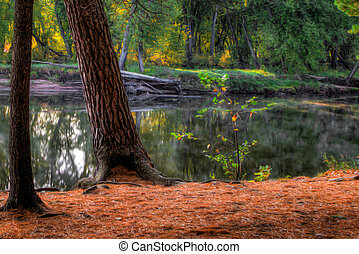 An HDR landscape of a forest and pond in soft focus