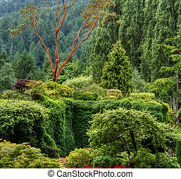 An HDR landscape of a forest and shrubs
