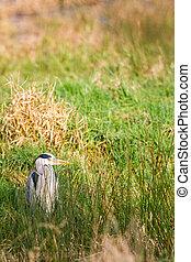 an heron in the field