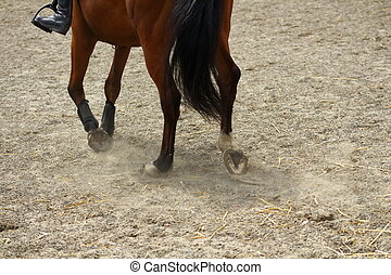 horse legs showing paces on sand with hooves