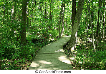 an iamge of a Bridge in woods