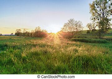 An idyllic evening landscape on a meadow field