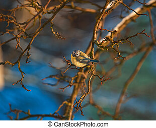 An ill titmouse sits on a branch of a bush on a winter day