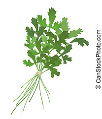 cilantro - an illustration of a bunch of cilantro isolated...
