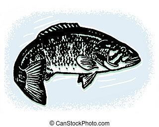 An illustration of a fish