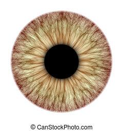 An illustration of a nice iris texture