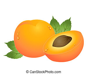 apricot - an illustration of a whole and half apricot with...
