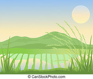 paddy fields - an illustration of an exotic sunset over ...