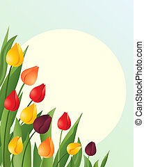 tulips - an illustration of red orange and yellow springtime...