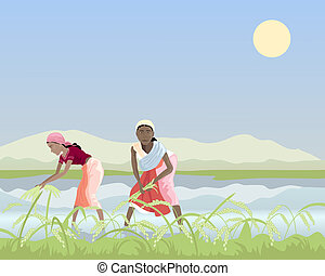 harvesting rice - an illustration of two asian women...