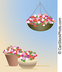 impatiens - an illustration showing a hanging basket and two...