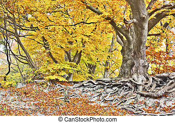 yellow autumn forest - An image of a beautiful yellow autumn...