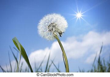 a dandelion flower in front of the blue sky