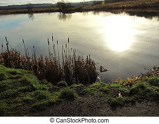 Nature reserve. - An image of a lake in an English Nature ...