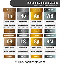 Human Body Immune Systems Chart - An image of a metallic ...