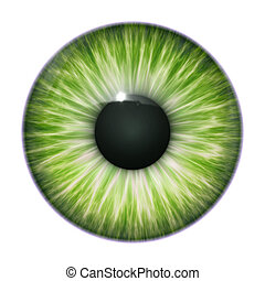 An image of a nice green eye texture