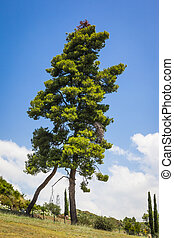 An image of a nice tree under a blue sky