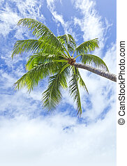 palm tree - An image of a palm tree and the blue sky with...