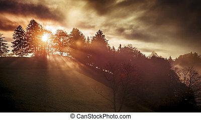 a sun shines through a tree