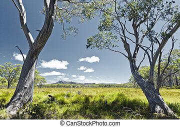 Tasmania - An image of a Tasmania green grass landscape