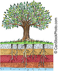 tree - An image of a tree showing layers of soil also...