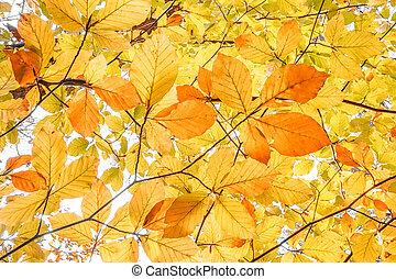 yellow autumn leaf background