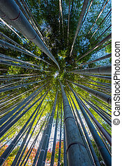 An Image of Bamboo Forest at Kyoto Japan