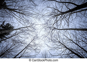 some leafless trees in the sky