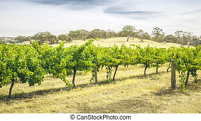 Barossa Valley - An image of the Barossa Valley landscape in...
