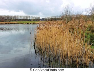 Nature reserve. - An image showing Reedbeds in an English ...
