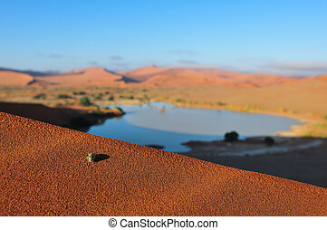 An insect at Sossusvlei in the Namib Desert