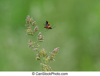 An Insect Flying off a Grass Stem