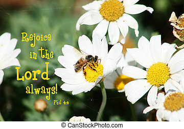 An inspirational word of scripture from the Bible in Philippians 4:4. Rejoice in the Lord always.