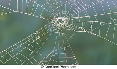 An interesting big web that a spider weaved in nature. Close up view