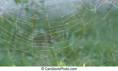 Spider web hanging on the grass in the summer meadow. Morning meadow in summertime. Web natural background.