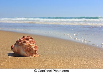 an invitation to rest - tender sea, wet golden sand and a ...