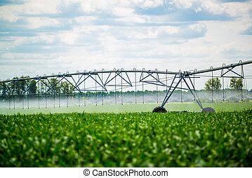 An irrigation pivot watering a field, beautiful view