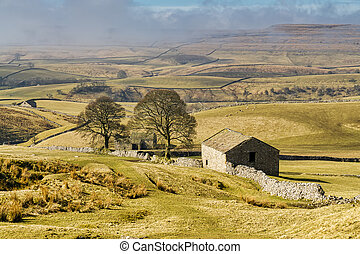 An isolated barn and trees in The Yorkshire Dales.