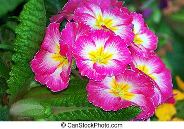 pink white Flower