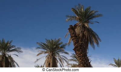 An Oasis of Tropical Trees Furnace - Blue skies make a good...
