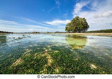 An ocean underwater reef with sun light through water surface. seagrass field