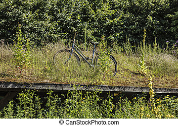 an old bicycle abandoned on a grassy roof