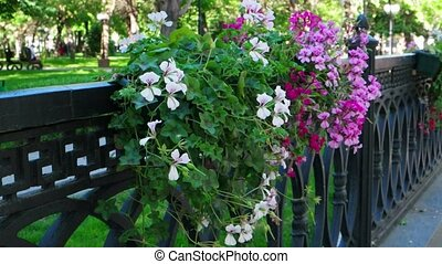 An old black iron fence with hanged flowerbeds (potted...