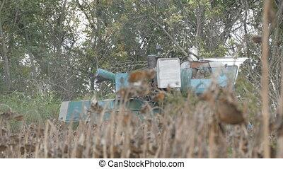 An old blue harvester harvests a sunflower crop on field....