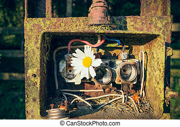 old fuse box - An old fuse box with a daisy