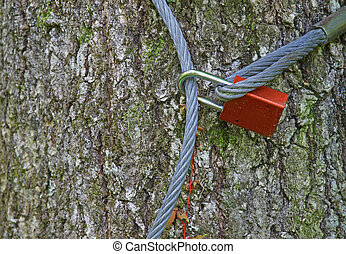 An old lock and cable around a tree securing something so no one can steal it with room for your text.